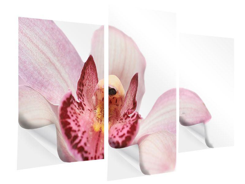 Klebeposter 3-teilig modern Orchideenblüte XXL