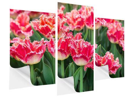 Klebeposter 3-teilig modern Die Tulpenwiese