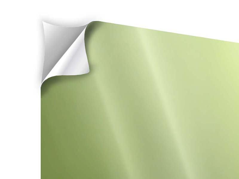 Klebeposter 3-teilig modern Pusteblume XL im Morgentau