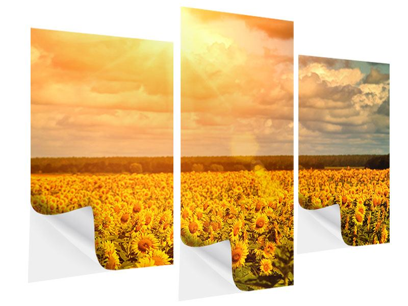 Klebeposter 3-teilig modern Goldenes Licht für Sonnenblumen