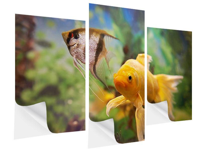 Klebeposter 3-teilig modern Bunte Fische