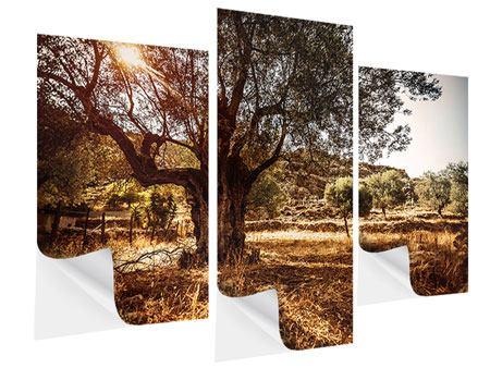 Klebeposter 3-teilig modern Olivenhain