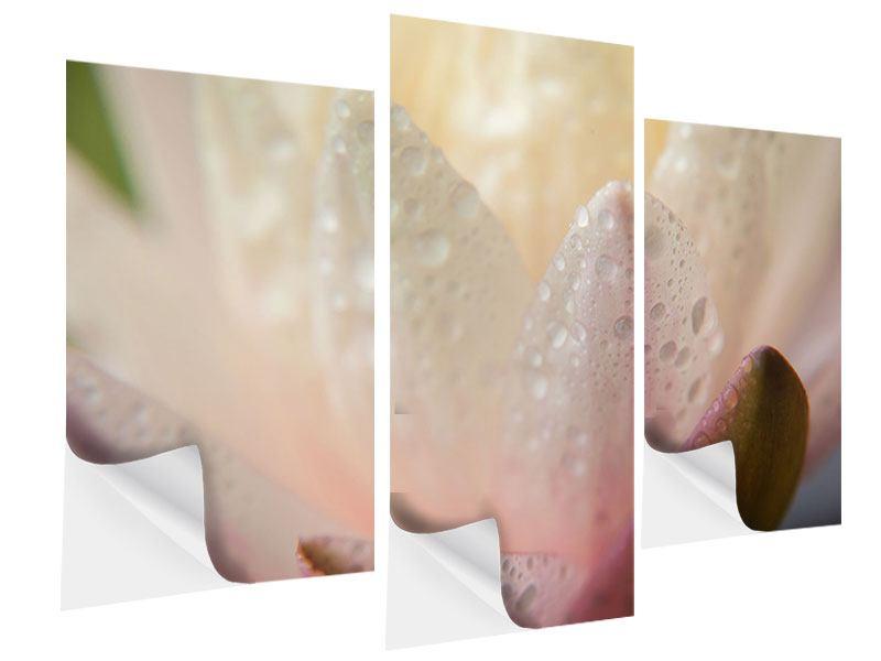 Klebeposter 3-teilig modern Close Up Seerose