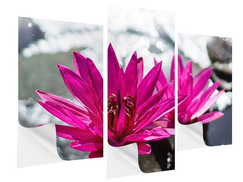 Klebeposter 3-teilig modern Seerosenduo in Pink