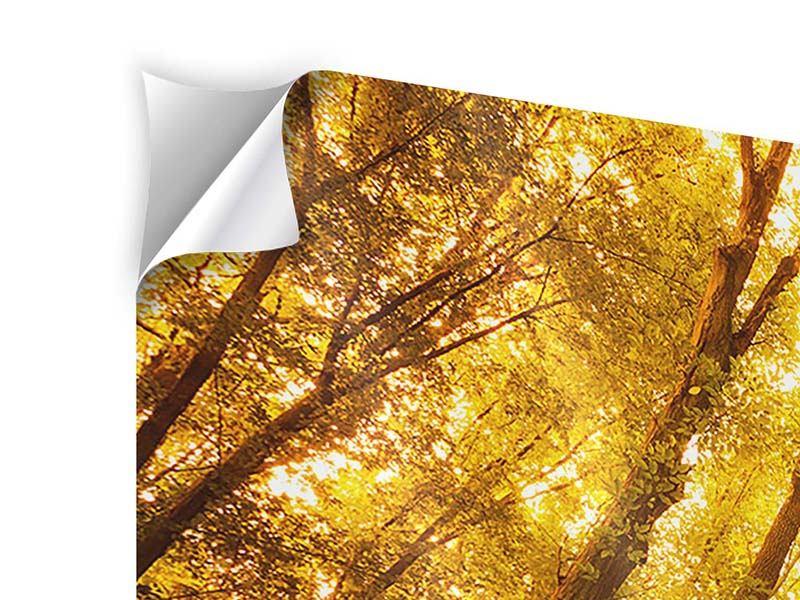 Klebeposter 3-teilig modern Herbstwald