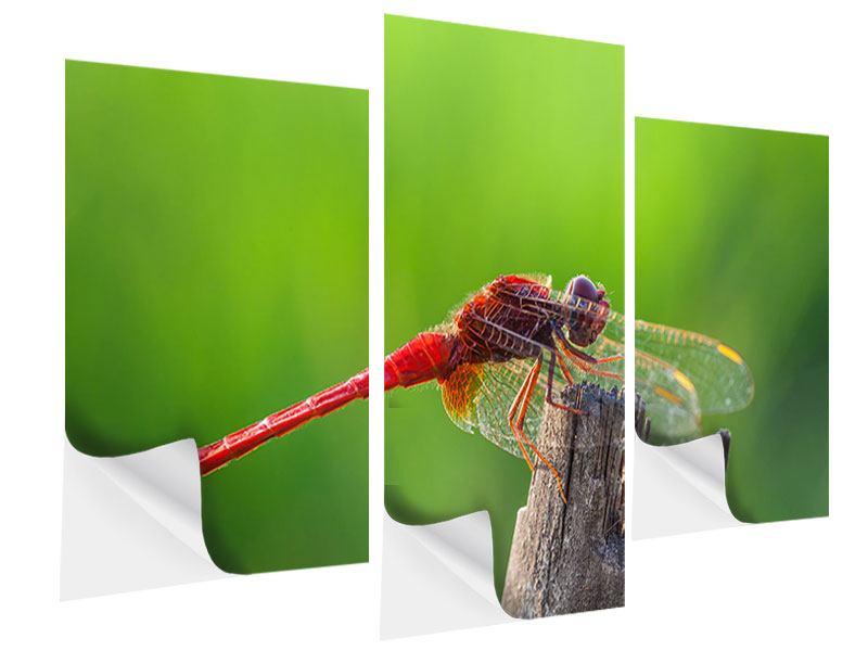 Klebeposter 3-teilig modern Libelle XXL