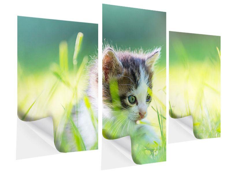 Klebeposter 3-teilig modern Kitten