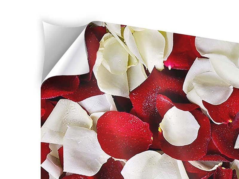 Klebeposter 3-teilig modern Rosenblätter
