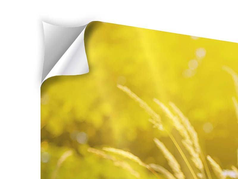 Klebeposter 3-teilig modern Sommerliche Blumenwiese
