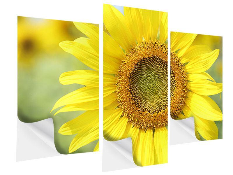 Klebeposter 3-teilig modern Die Blume der Sonne