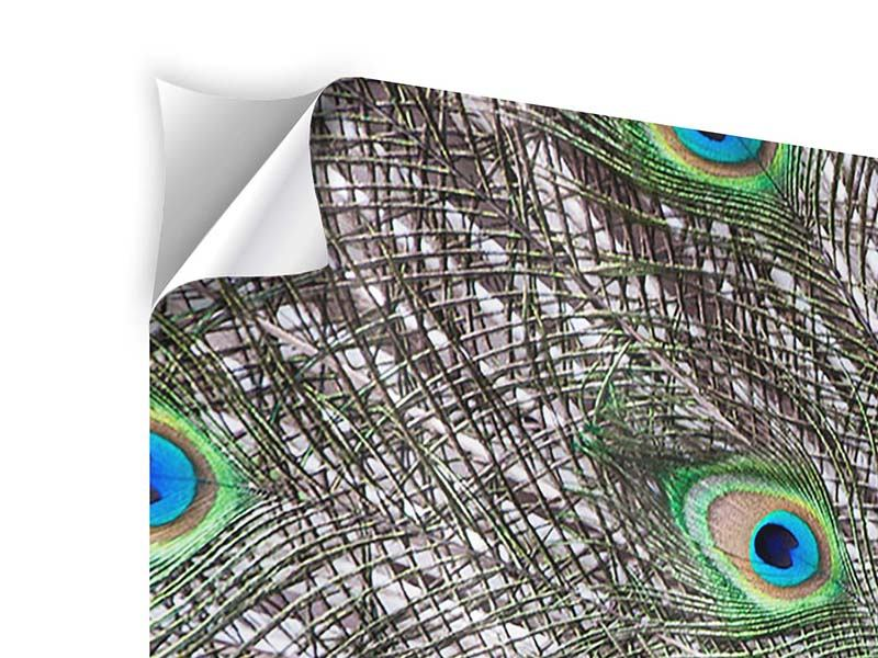 Klebeposter 3-teilig modern Blauer Pfau