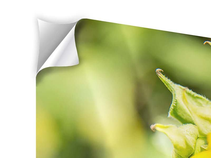 Klebeposter 3-teilig modern Wilde Sonnenblume