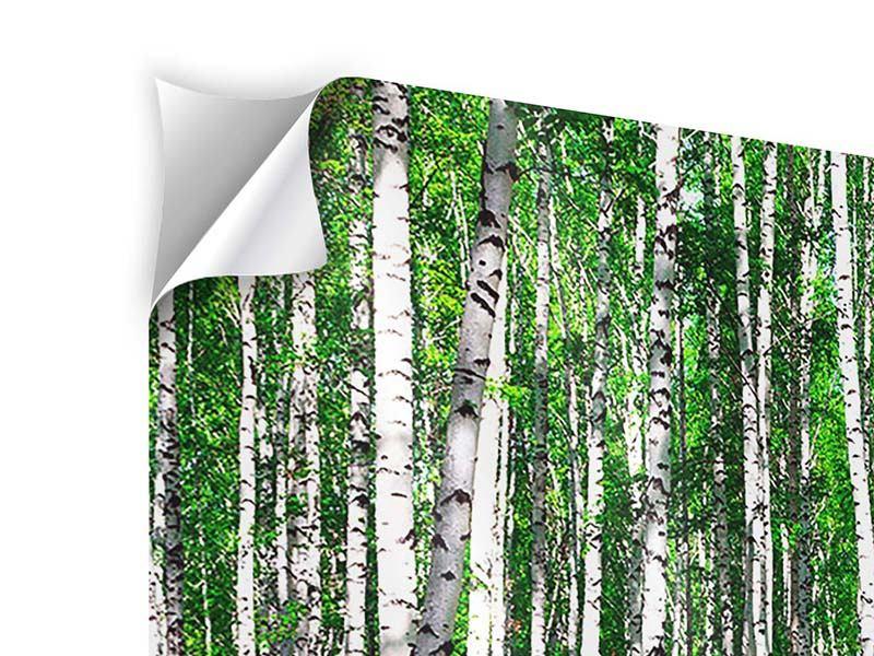 Klebeposter 3-teilig modern Sommerlicher Birkenwald