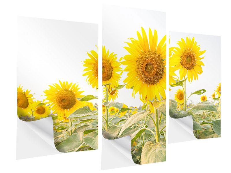 Klebeposter 3-teilig modern Das Sonnenblumenfeld