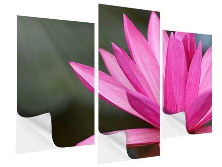 Klebeposter 3-teilig modern XXL Seerose in Pink