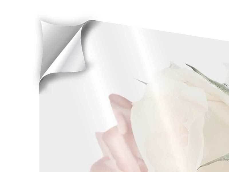 Klebeposter 3-teilig modern Rosenromantik