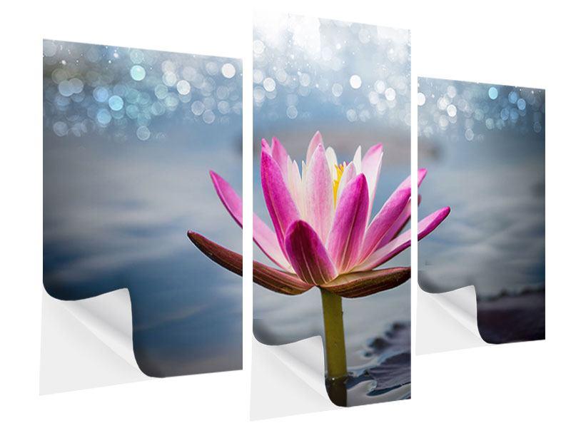 Klebeposter 3-teilig modern Lotus im Morgentau