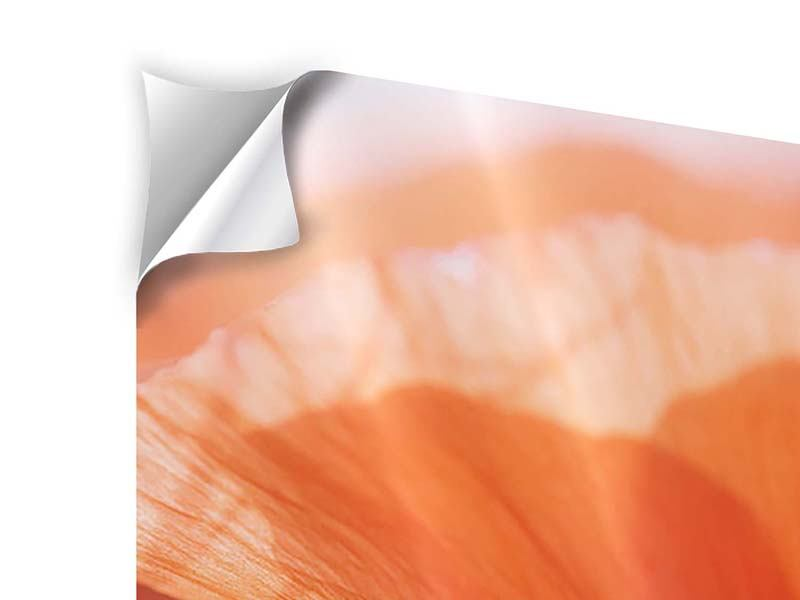 Klebeposter 4-teilig modern Klatschmohn XXL