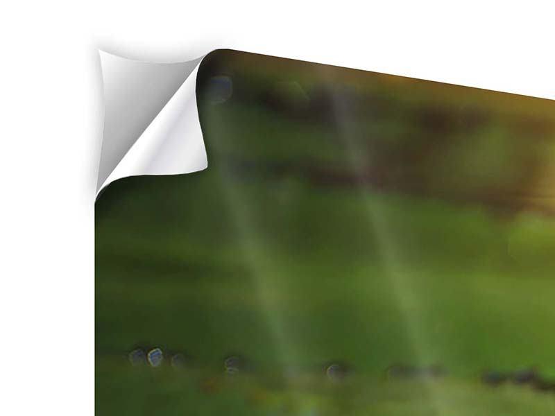 Klebeposter 4-teilig modern Lilienspiegelung