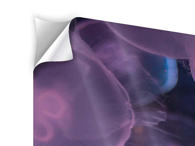 Klebeposter 4-teilig modern Die Schönheit der Quallen