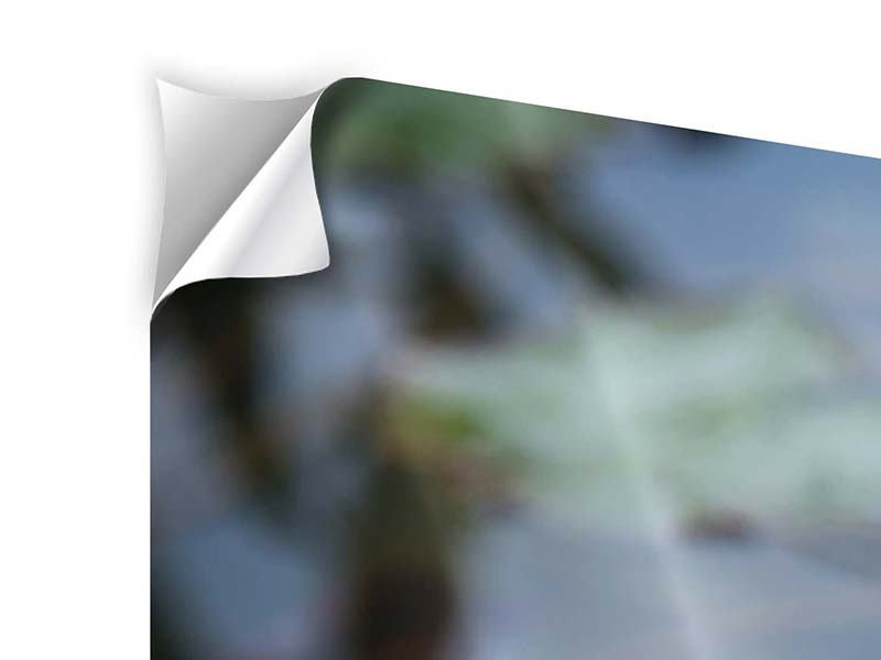 Klebeposter 4-teilig modern Das Seerosenduo