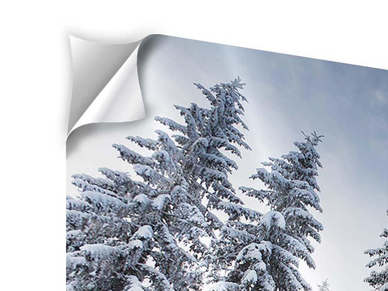 Klebeposter 4-teilig modern Wintertannen