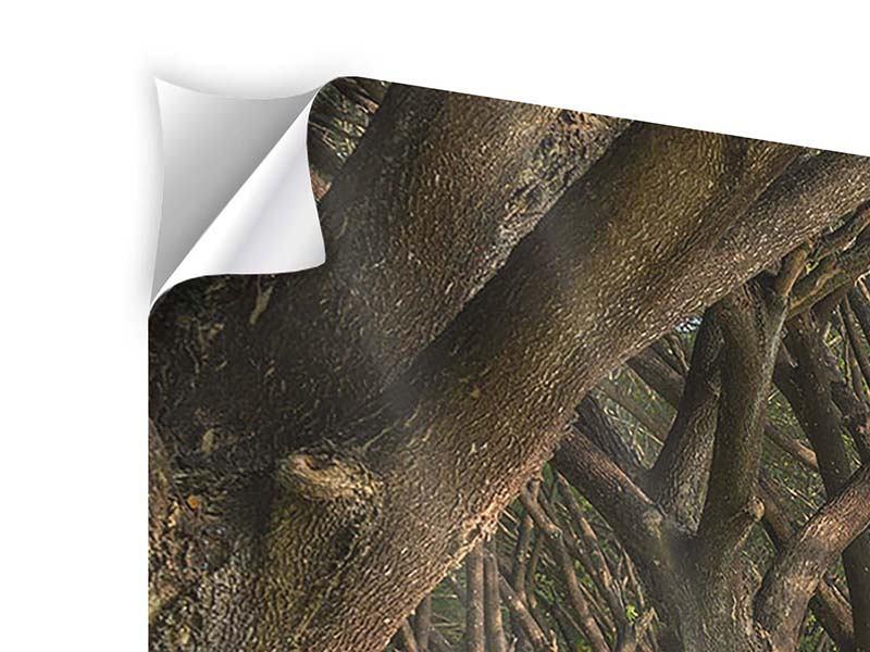 Klebeposter 4-teilig modern Alter Baumbestand