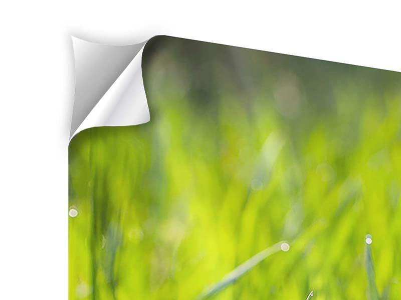Klebeposter 4-teilig modern Gras im Morgentau