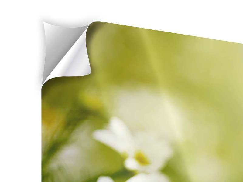 Klebeposter 4-teilig modern Die Gänseblümchen