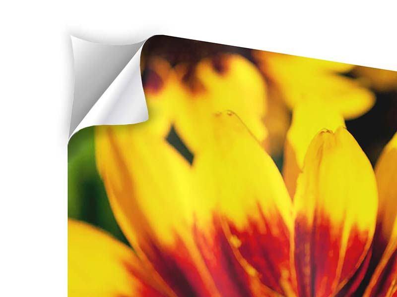 Klebeposter 4-teilig modern Reife Sonnenblumen