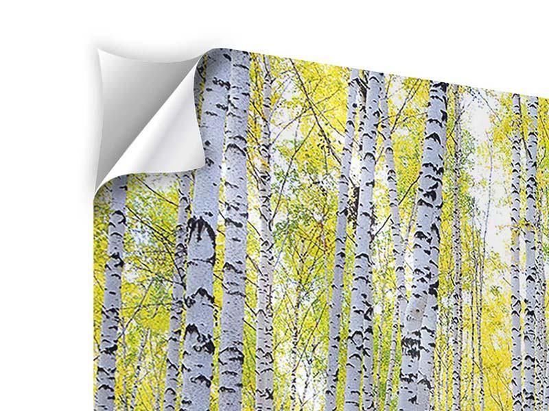 Klebeposter 4-teilig modern Herbstlicher Birkenwald