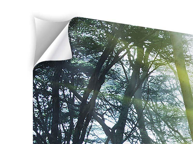 Klebeposter 4-teilig modern Sonnenstrahlen im Wald