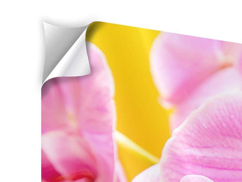 Klebeposter 4-teilig modern Königliche Orchideen