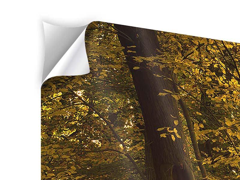 Klebeposter 4-teilig modern Herbstlaub