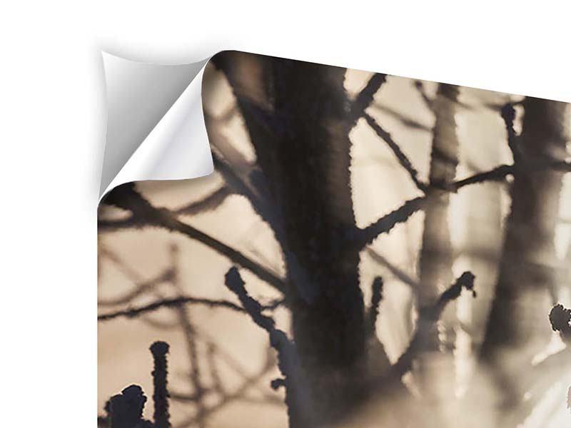 Klebeposter 4-teilig modern Äste im Schleierlicht