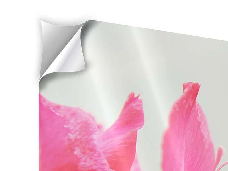 Klebeposter 4-teilig modern Gladiolen