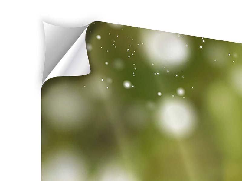 Klebeposter 4-teilig modern Lilien-Lichtspiel