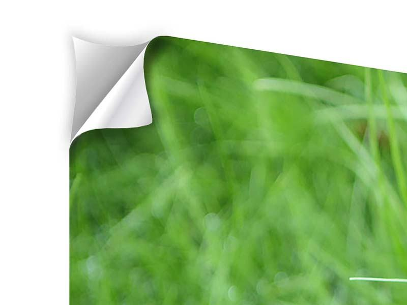 Modern 4 Piece Self-Adhesive Poster Blades Of Grass