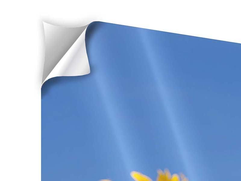 Klebeposter 4-teilig Himmlische Sonnenblumen