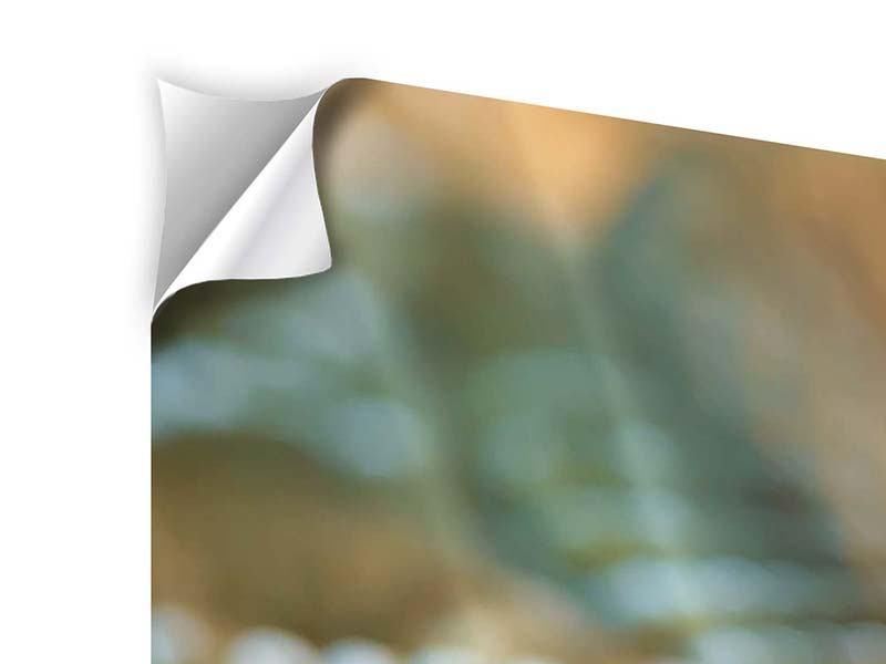 Klebeposter 4-teilig Viper