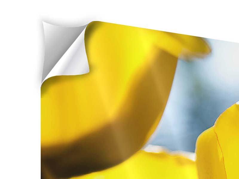Klebeposter 4-teilig Gelbe Tulpen in XXL