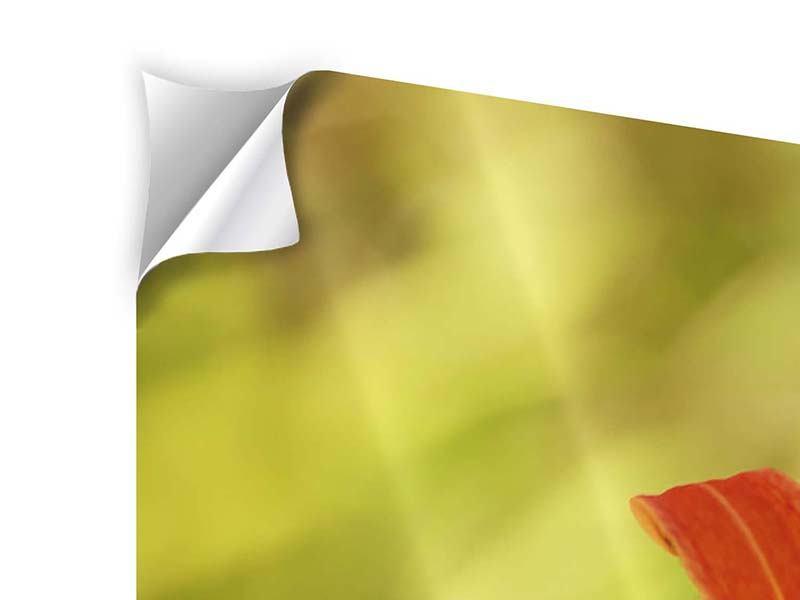Klebeposter 4-teilig Natural Lilien