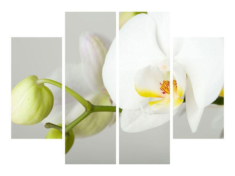 Klebeposter 4-teilig Riesenorchidee