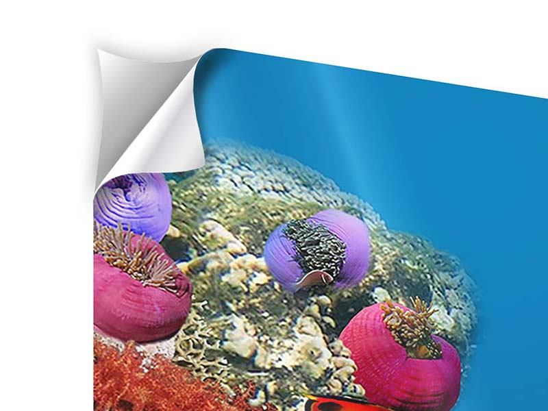 Klebeposter 4-teilig Fisch im Wasser