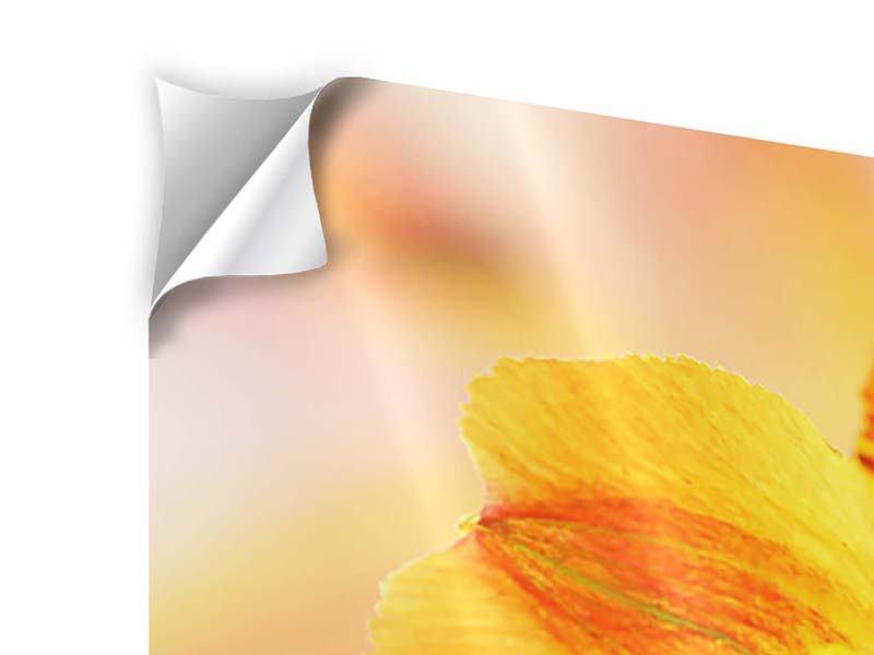 Klebeposter 4-teilig Lilien-Frühstück