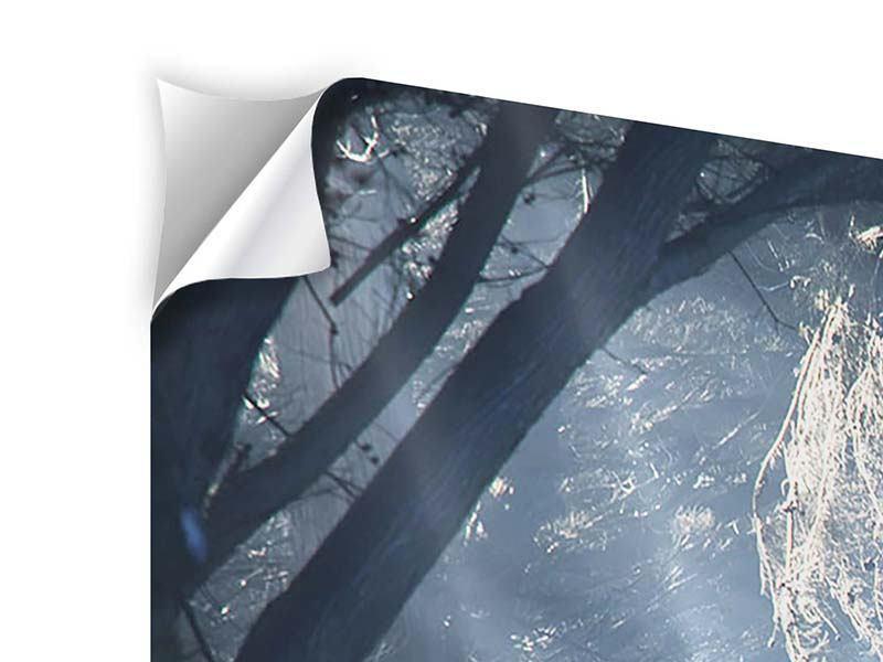 Klebeposter 4-teilig Lichtdurchflutete Baumallee