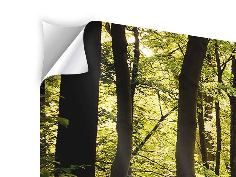 Klebeposter 4-teilig Sonnenaufgang im Wald