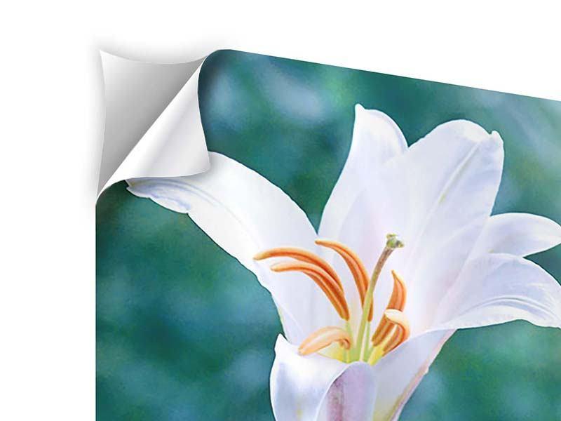 Klebeposter 4-teilig Weisses Lilienduo