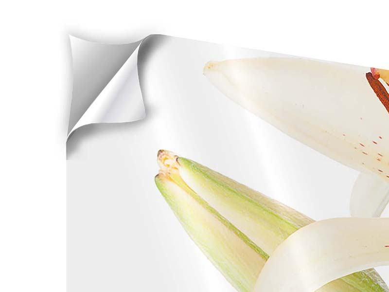 Klebeposter 4-teilig Weisser Lilienstrauch