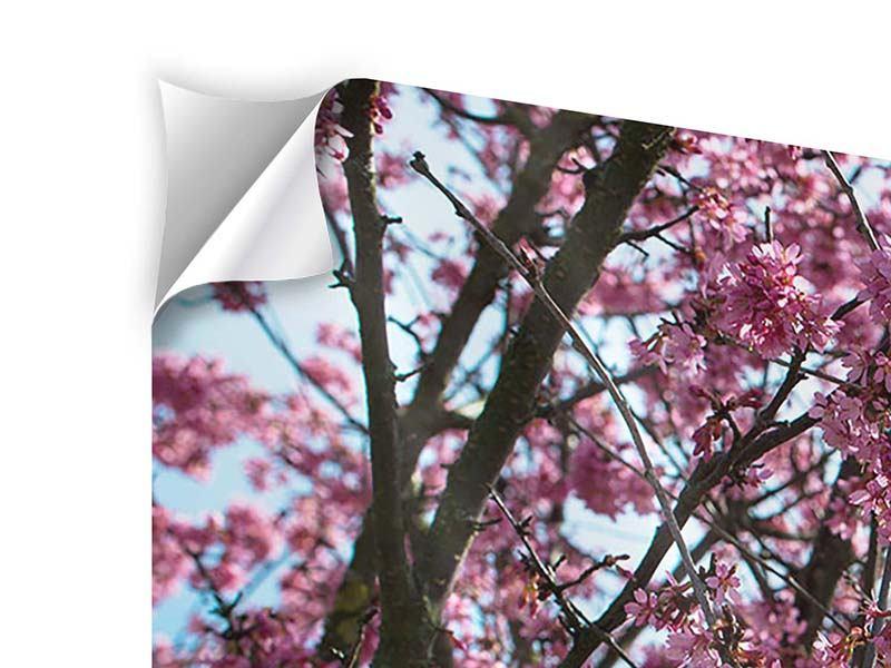 Klebeposter 4-teilig Japanische Blütenkirsche